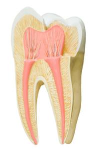 endodontia - site